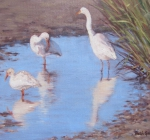 Egrets at Low Tide