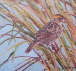 Salt Marsh Sparrow II