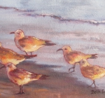 Sunset Shorebirds