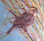 Marsh Sparrow I