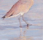 Shorebird Reflections I